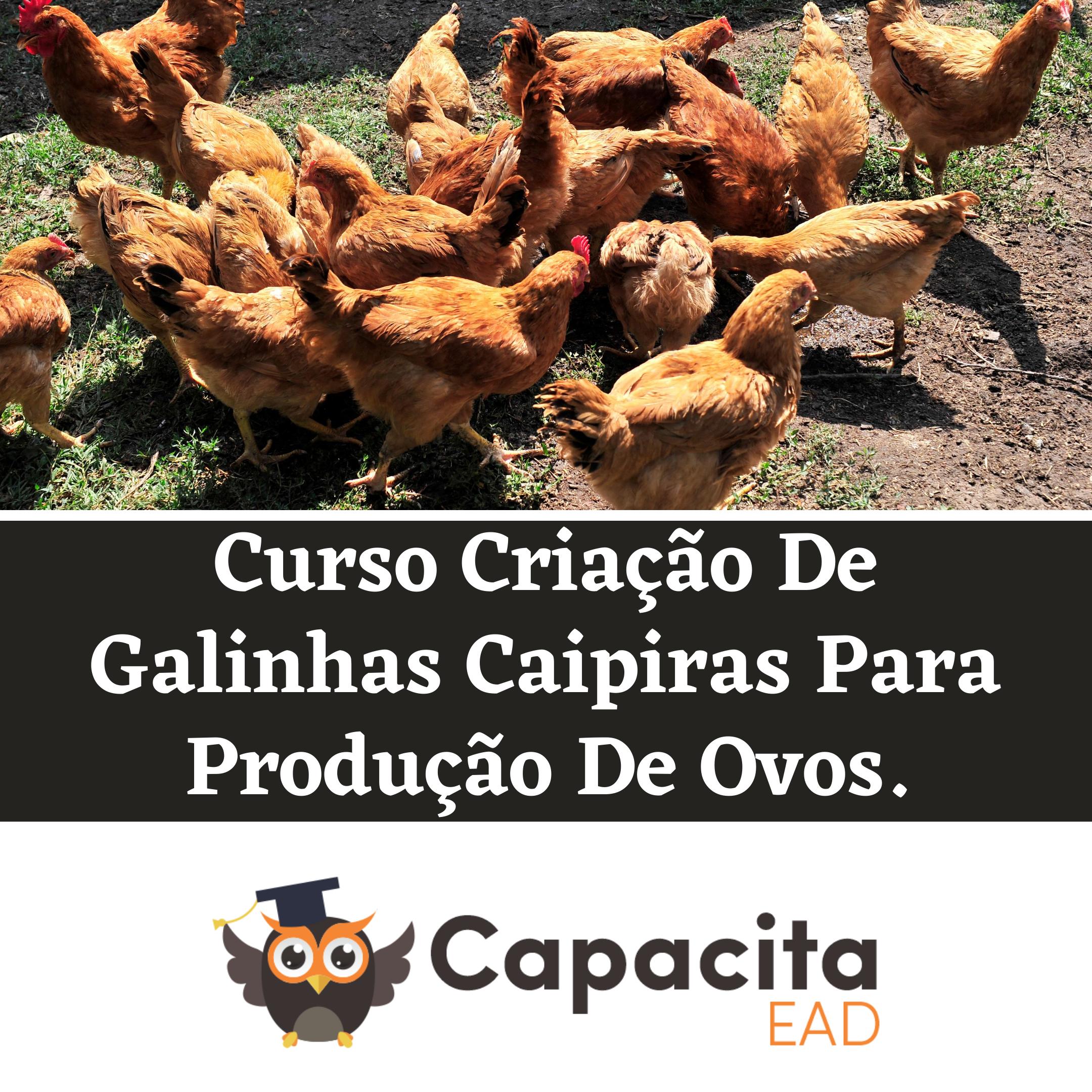 Curso Criação De Galinhas Caipiras Para Produção De Ovos