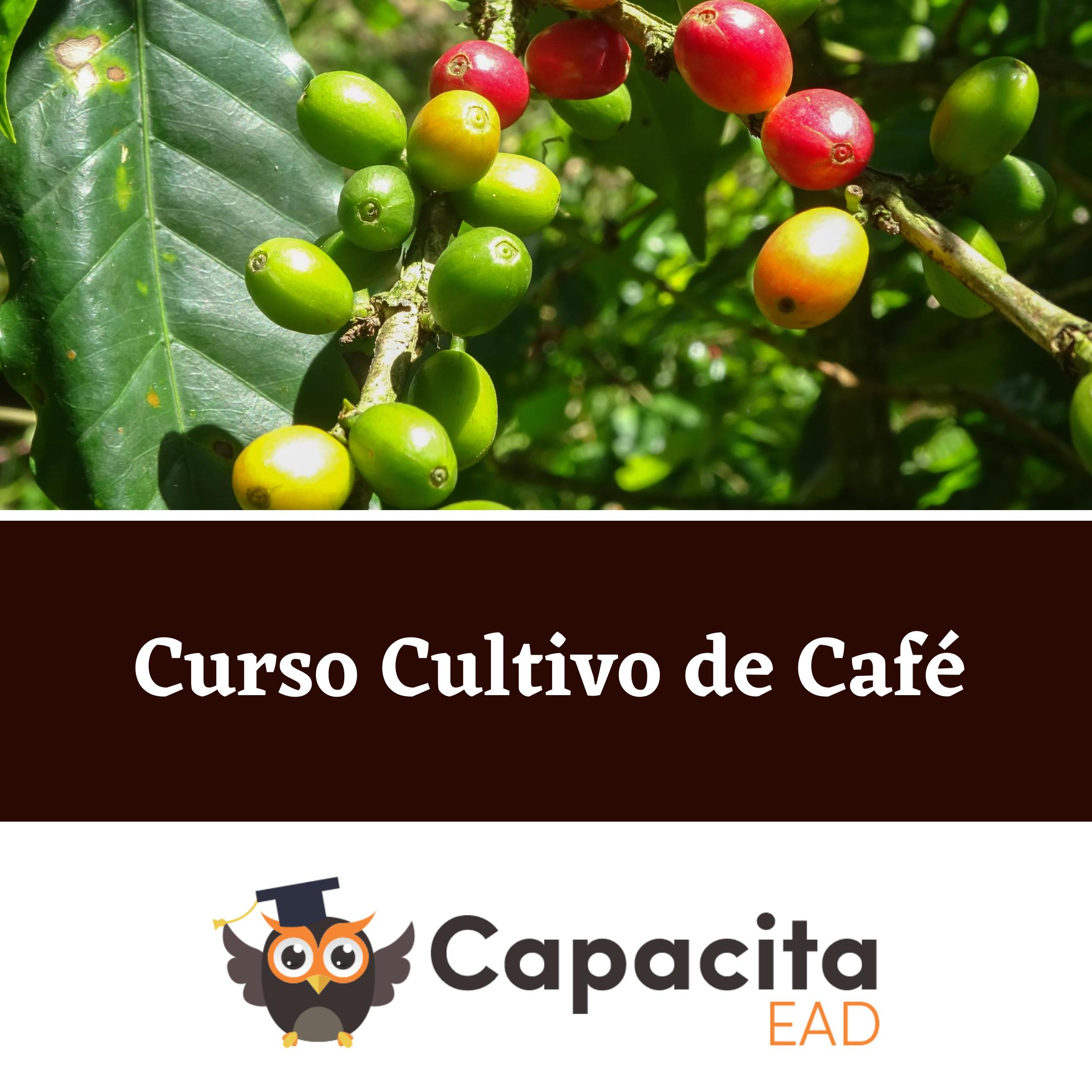 Curso Cultivo de Café