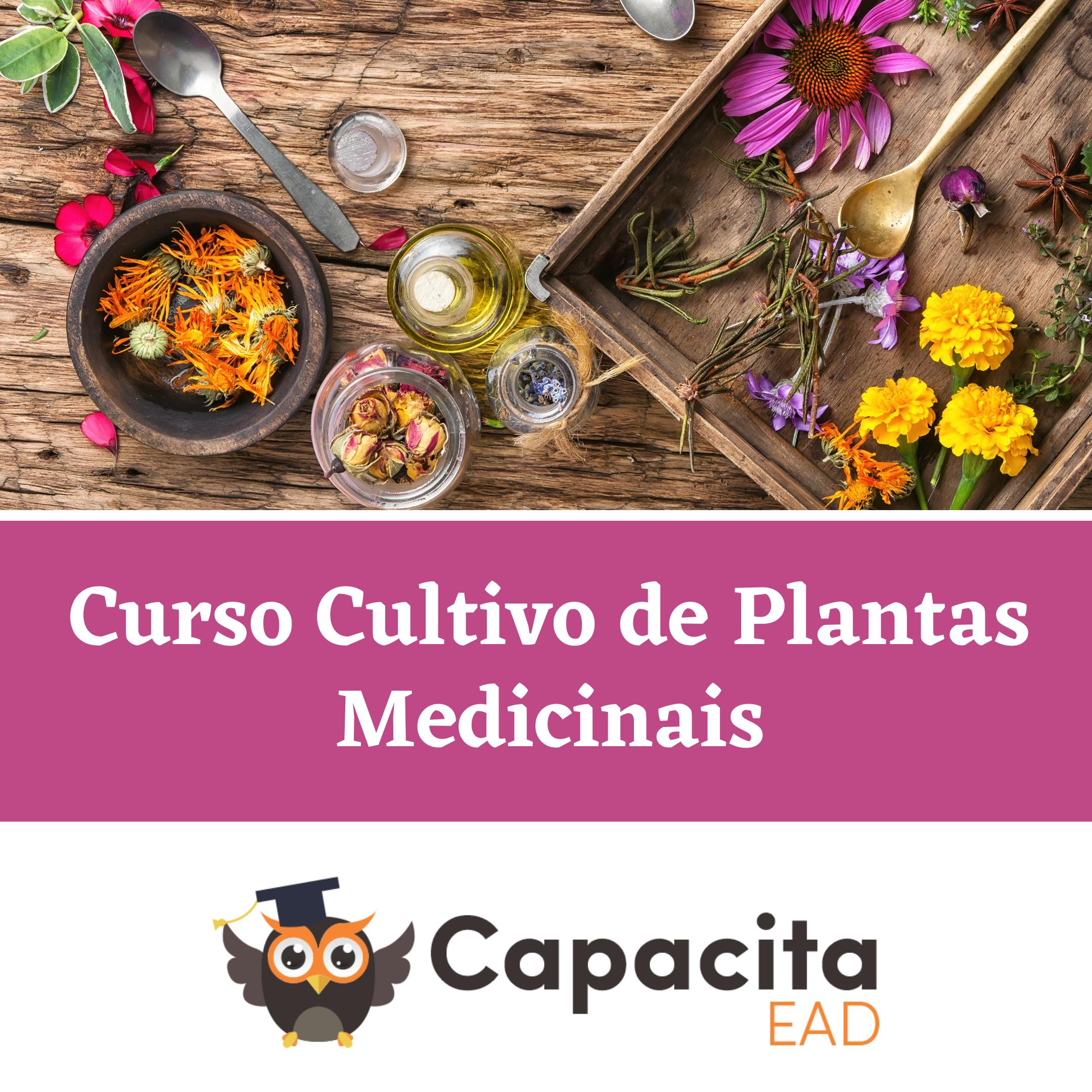 Curso Cultivo de Plantas Medicinais