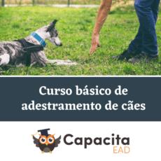 Curso básico de adestramento de cães